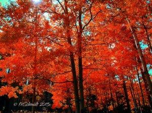 autumn_13oct2015_by_mschmidtphotography-d9fb8go