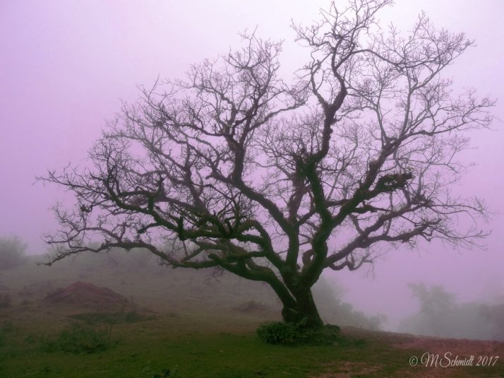 misty_morning_18july2017_by_mschmidtproductions-dbgt576