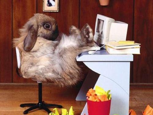 cute-bunny-computer-500
