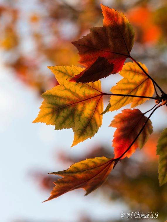 AutumnColors-ab-389010