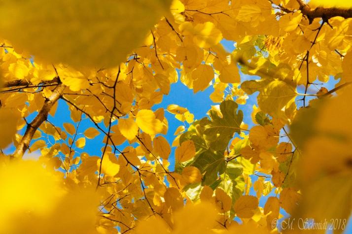AutumnColors-ad-t-424266